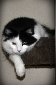 kitty staring