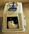 kitty box 011