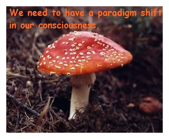 beautiful-picture-red-mushroom-toadstool1