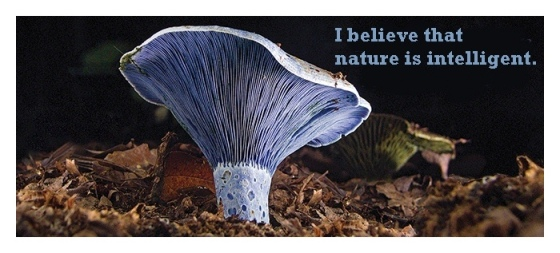 Indigo mushroom