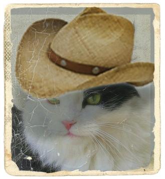 preston cowboy hat antique