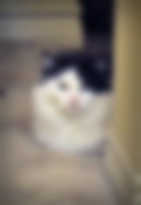 blurry kitty
