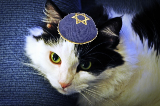 Kitty Shalom