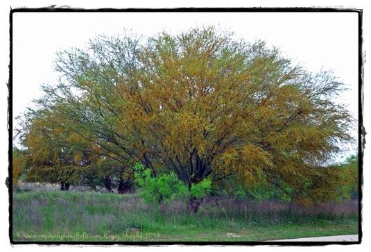 Color burst tree